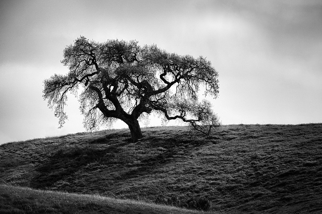 Felipe Tree
