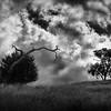 Tree Harmony