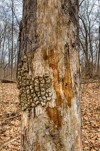 Stripped Tree Bark