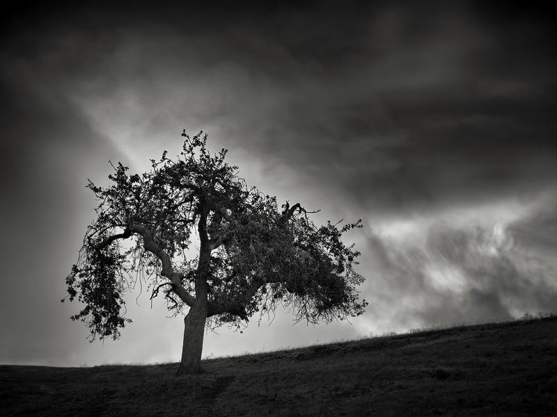 A Tree in November