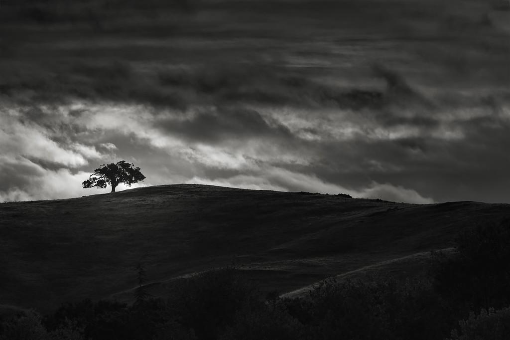 September Morning Oak