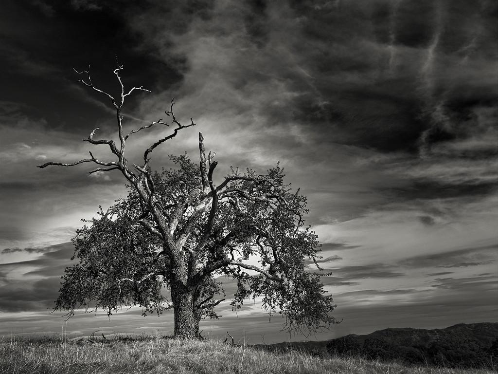 A Tree behind a Tree