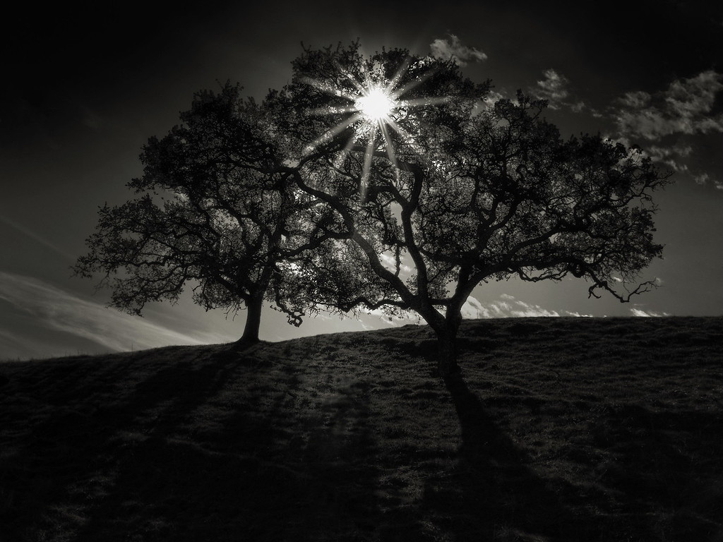 Two Trees and The Star