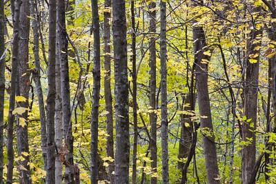 Autumn Transitioning Foliage
