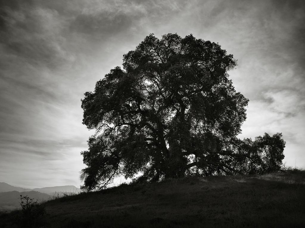 Mine Hill Tree