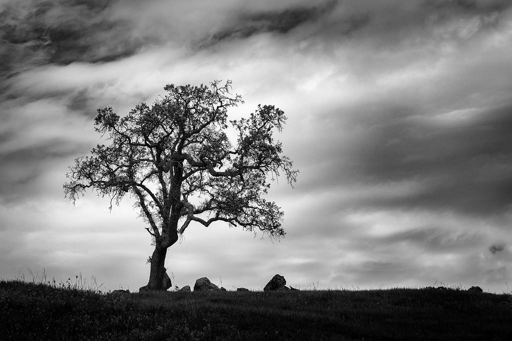 Oak Tree with Rocks