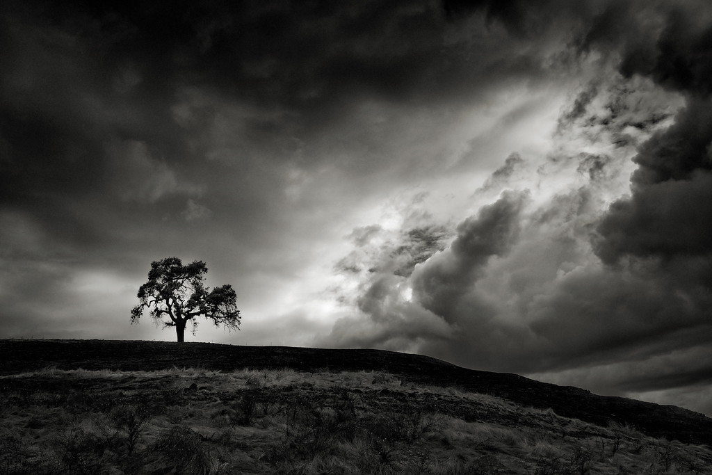 Tree with Nearing Strom