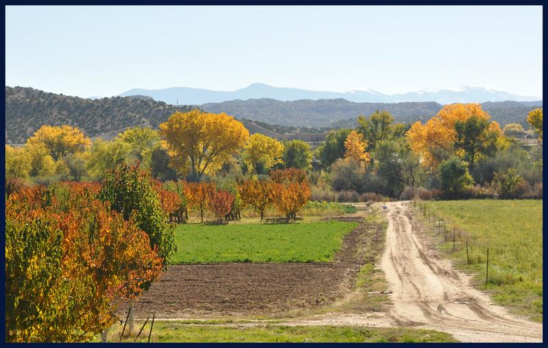 Autumn Trees near the Rio Grande, Sangre de Cristo Mountains in Distance