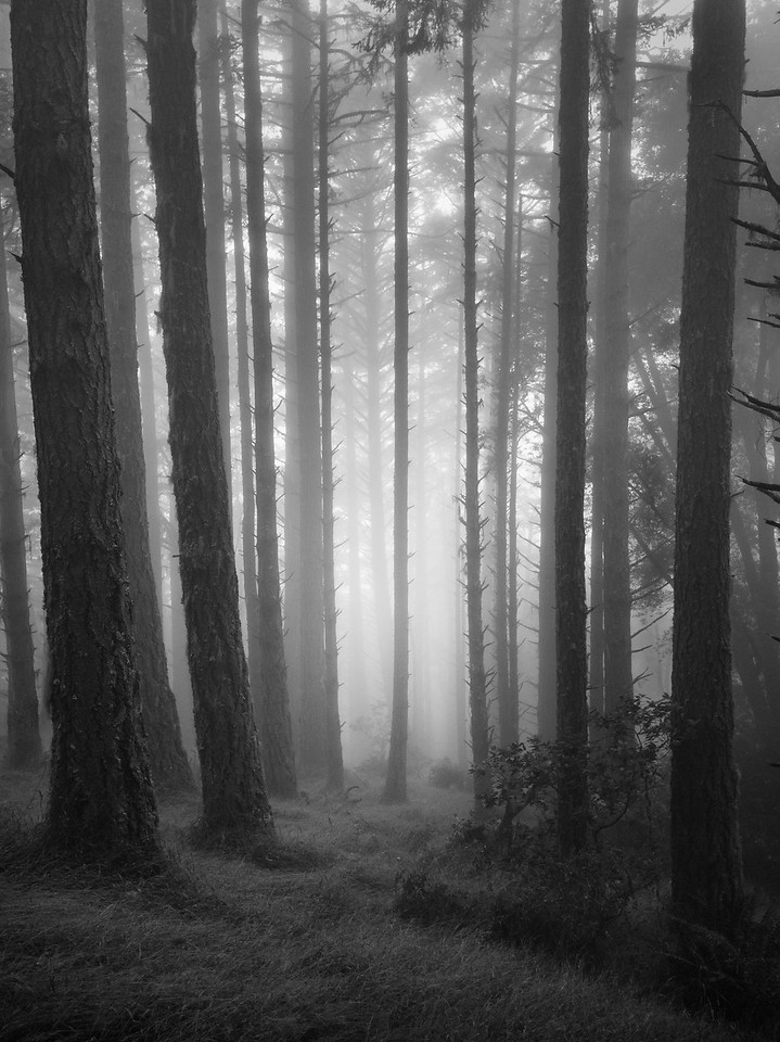 Forest in Summer Morning Fog