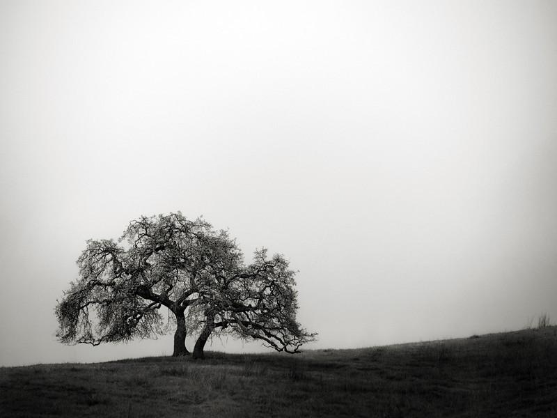 Tree Concord