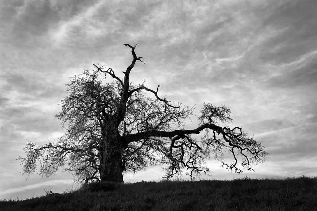 A Quaint Tree