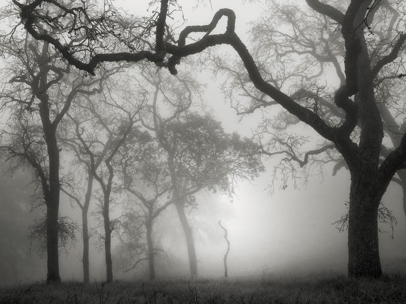 Hunting Hollow Fog Series 1