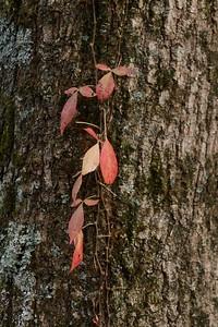 Leaf Detail on Tree