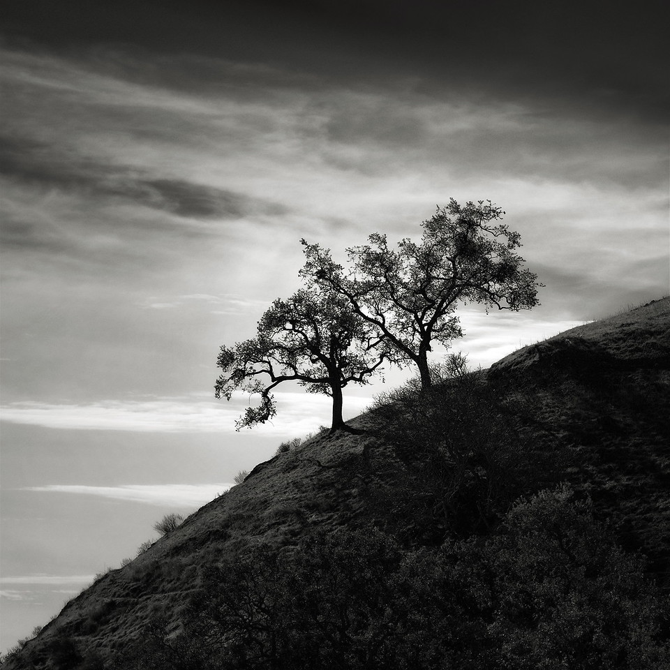 A Pair of Trees along the Sierra Vista Trail