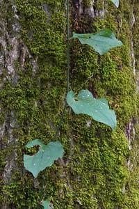 Tree Details