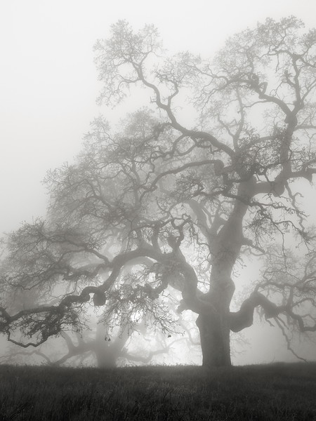 Hunting Hollow Fog Series 2