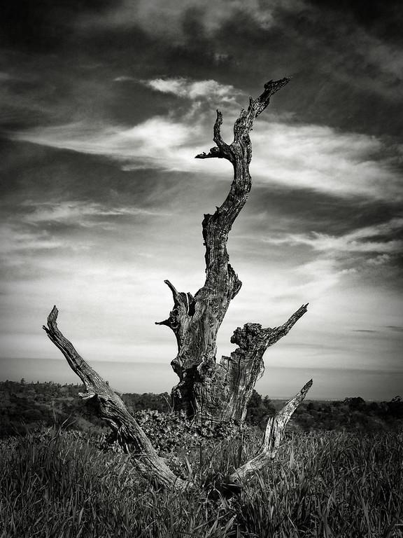 Tree Remnant
