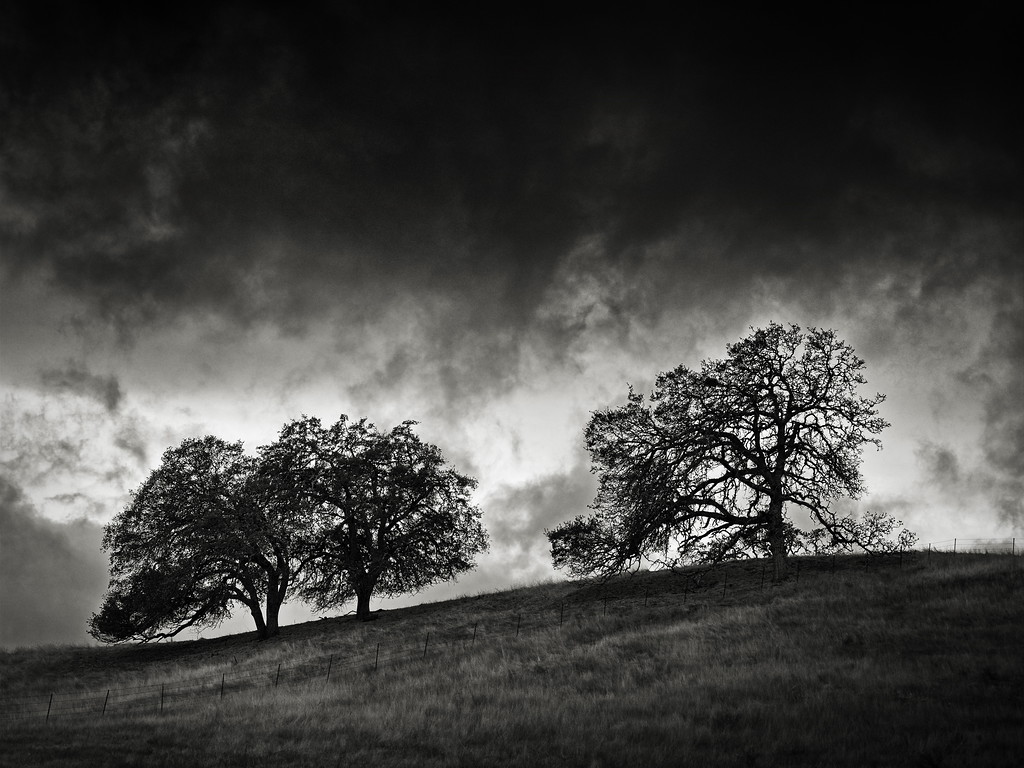 Three Trees behind a Fence on a Hill