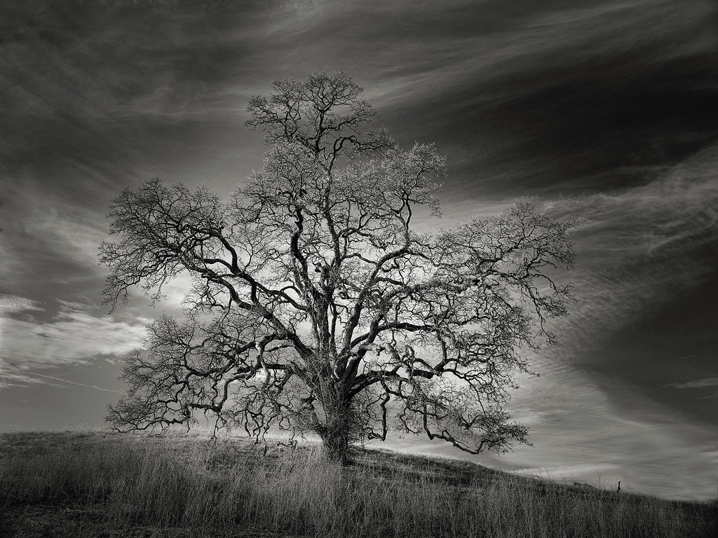 The Leaf Tree
