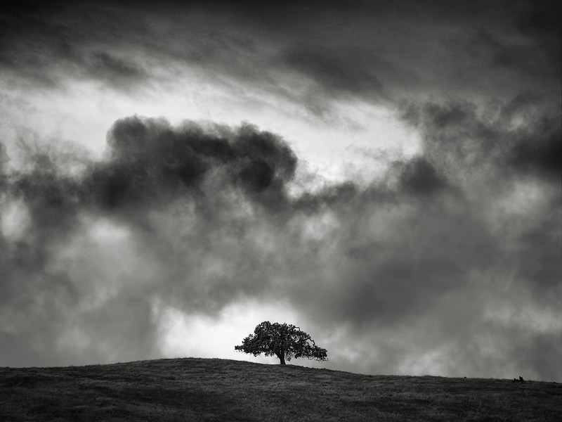 The Tree and the Storm