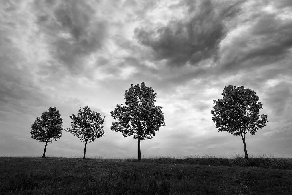 Vier Bäume am Strassenrand