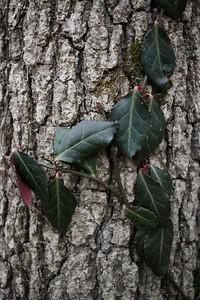 Vine Leaves and Tree Bark Detail