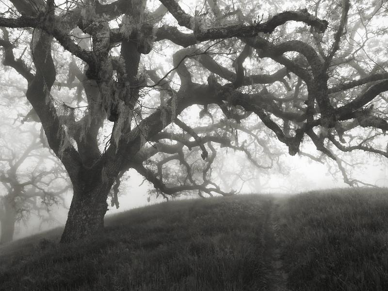Hunting Hollow Fog Series 6