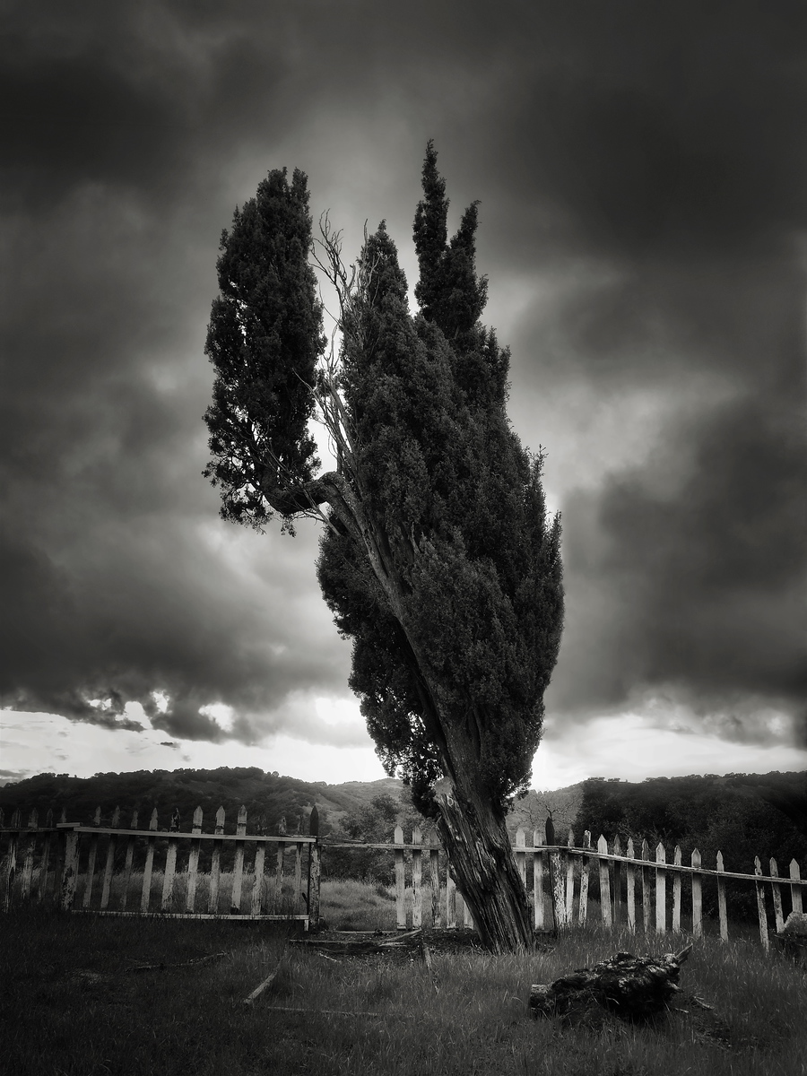 A Tree at the Cemetery