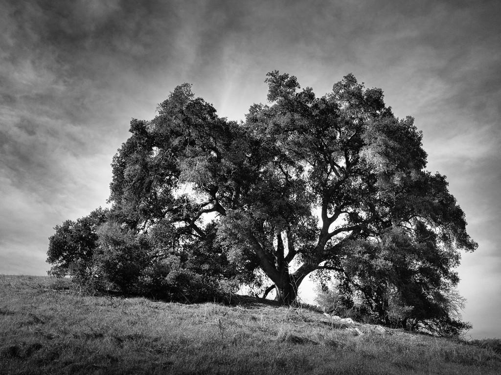 Grand Tree