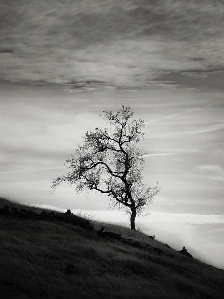 A Lanky Tree
