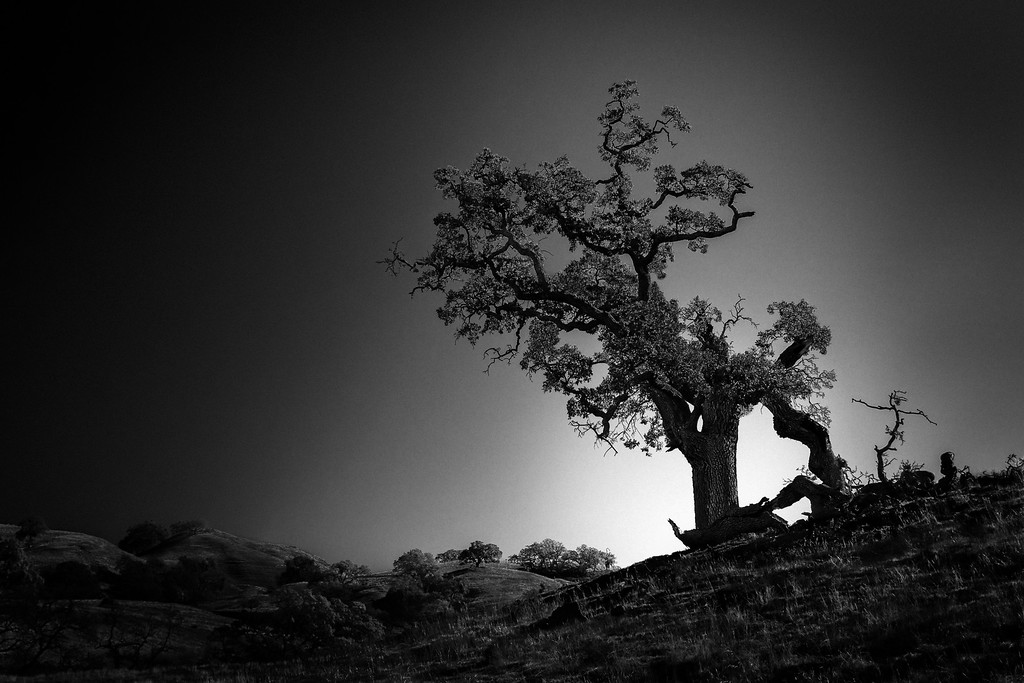 A Tree in the Wilderness