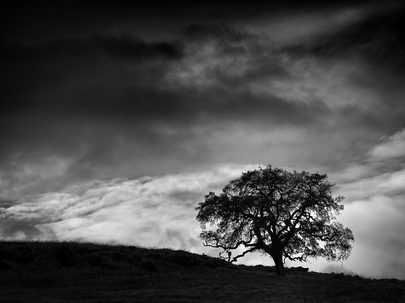 Tree at Calero with Clouds