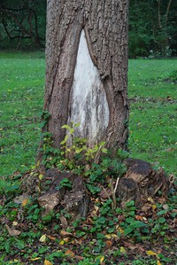 Unique Park Tree Trunk