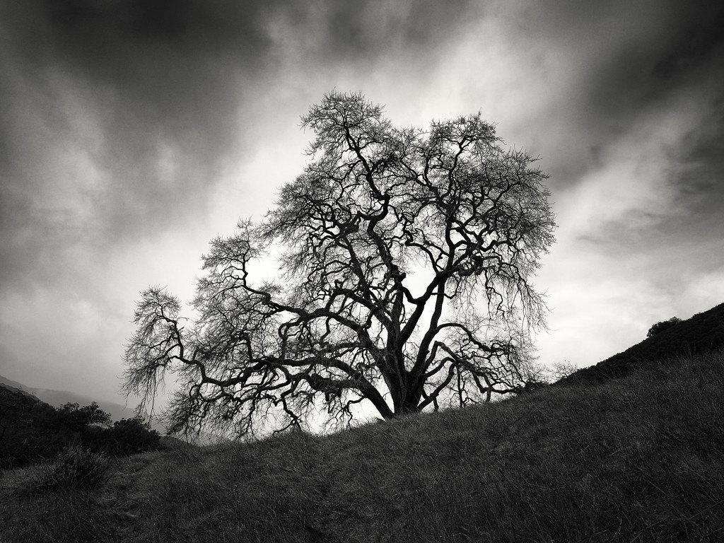 Guadalupe Trail Tree