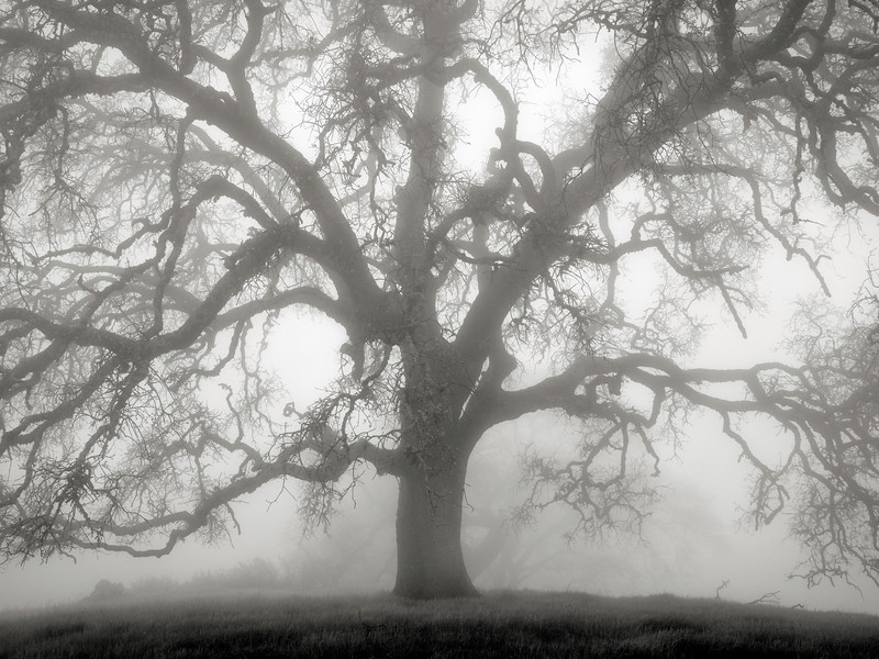 Hunting Hollow Fog Series 3