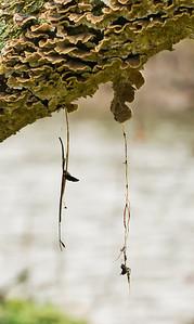 Lichen Detail on Crooked Tree