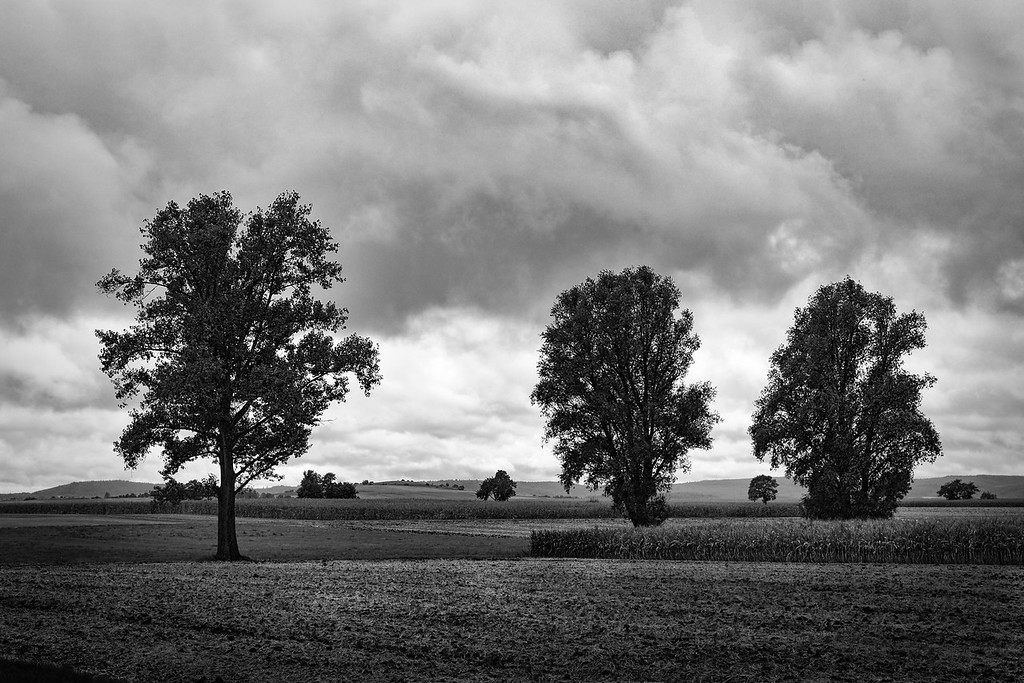 Große und kleine Bäume im Feld