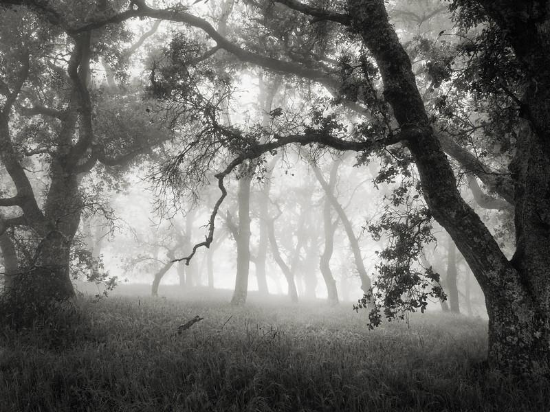 Hunting Hollow Fog Series 5