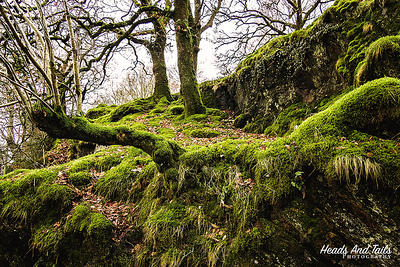Moss covered trees - Wales, UK
