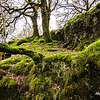 30 Moss covered trees - Wales, UK