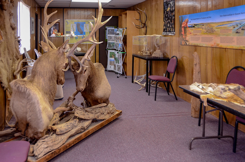 Inside the visitor center at the Tule Elk State Nature Reserve