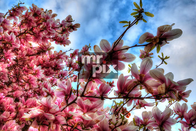 Sweet Spring Blooms - Photo by © Michael Moore_MrPix.com