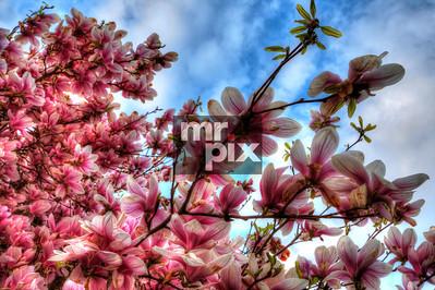 Sweet Spring Blooms - Photo by © Michael Moore_MrPix.com