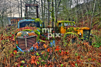 Old trucks in the Valley
