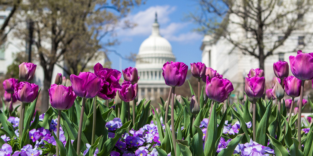 Capitol Spring