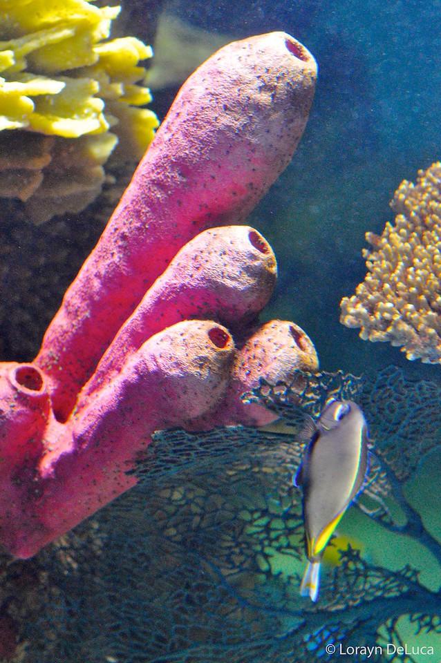 underwater surprise