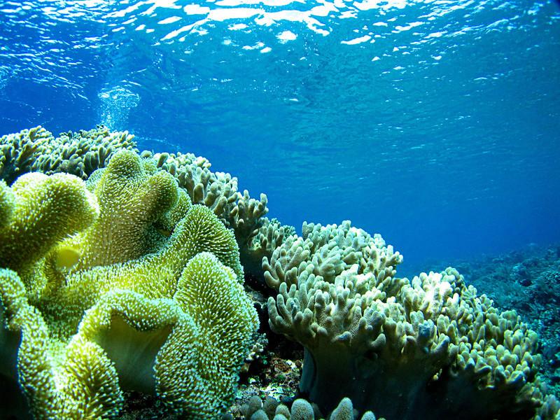 Bunaken Soft Corals
