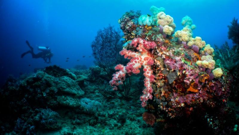Coral Diver 2