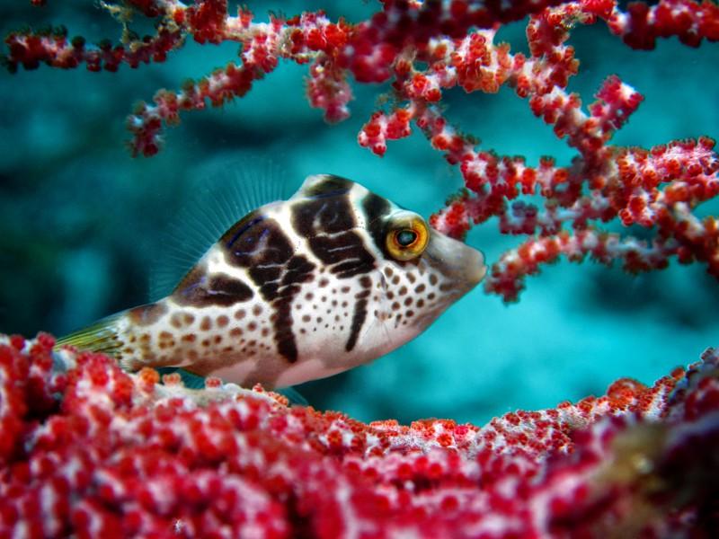 Coral Fish 1