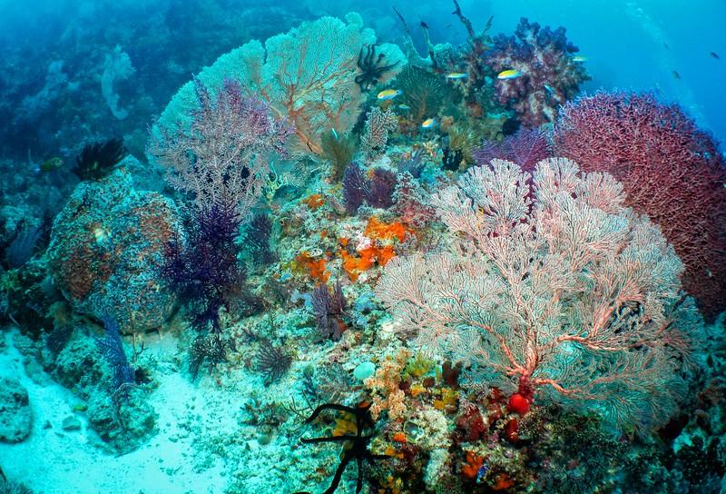 Coral Gardens 1